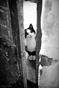 black and white cat photo Pretty Cats, Beautiful Cats, Animals Beautiful, Cute Animals, Funny Animals, Pretty Kitty, Crazy Cat Lady, Crazy Cats, I Love Cats