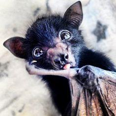 What a cute bat !!