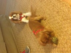 Playful puppies!