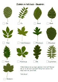 Ticklist of common tree leaves. Get kids outdoors exploring with this fresh activity from the Woodland Trust's nature detectives website. Bring the outdoors into your classroom with this inspiring activity from the Woodland Trust's nature detectives we. Forest School Activities, Nature Activities, Outdoor Activities For Preschoolers, Flower Activities For Kids, Summer Holiday Activities, Scout Activities, Autumn Activities, Science Nature, Outdoor Education