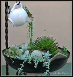 I have really bad luck with most hanging succulents like string of pearls but I love how this looks! Mini jardim com suculentas Like the idea of the spilling of plants into a planter Succulent Gardening, Cacti And Succulents, Planting Succulents, Container Gardening, Planting Flowers, Organic Gardening, Indoor Gardening, Succulent Garden Ideas, Potted Garden
