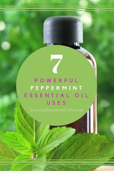 7 Powerful Peppermint Essential Oil Uses