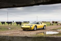 """Welcome to Lora del Rio, Andalusia. The Miura family's is one of the oldest """"ganaderías""""–bull breeding farms– in Spain, founded 175 years ago. Lamborghini Miura, Motor V12, Automobile, Andalusia, Time Travel, Madrid, Classic Cars, Spain, Old Things"""