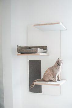 Cat Wall Furniture, Cat Climbing Tree, Cat Stairs, Cat House Diy, Diy Cat Tree, Pet Hotel, Cat Perch, Cat Shelves, Cat Room