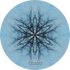 Sky Lace Nature Mandala  http://www.zenmoments.org/mandalas/sky-lace-nature-mandala/