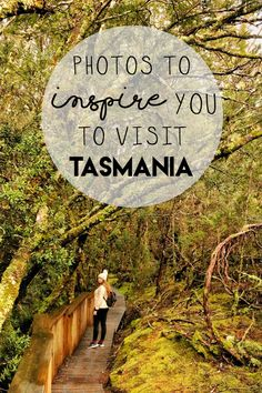 Visiting Tasmania really made me realise just how much Australia has to offer. This diverse country I live in continues to astound me with its many pristine beaches, ancient rainforests, distinct wildlife, friendly people and… Tasmania Road Trip, Tasmania Travel, Cook Islands, Fiji Islands, Western Australia, Australia Travel, Queensland Australia, Places To Travel, Places To See