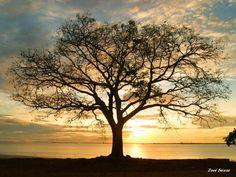 Árvore da Vida-1