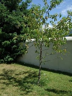 example of the strawbale wall
