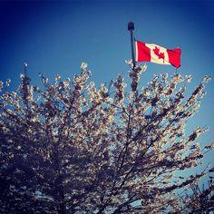 Happy Canada Day! #canada #home #CanadianTeaBar #canada150