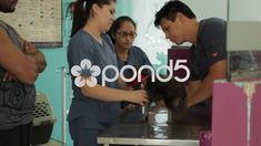 Medical Office Staff, Veterinarian Giving Checkup Stock Footage , Doctor In, Chihuahua Dogs, Video Footage, Model Release, Stock Video, Stock Footage, Aquarium, Medical, Goldfish Bowl