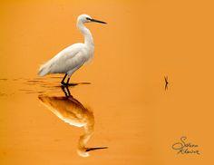 Golden light#2 by Saleem Khawar