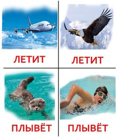 Flying / Swimming