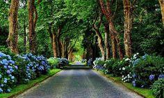 @sakis_7 Σάκη μου, γλυκό μου φιλαράκι, χρόνια πολλά, πάντα γερός, τυχερός, με πολλή αγάπη & ολάνθιστους δρόμους