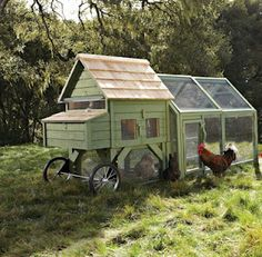 Posh Chicken Pen