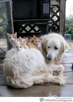 kittens & dog