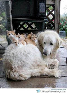 "Some cats find unusual homes. (Cats to dog: ""Please don't move!"""