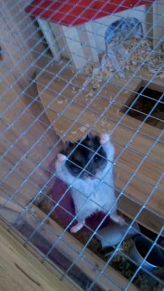 Hamster exercisehttps://i.redd.it/errqn7t6e5k01.png
