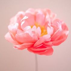 I made lots of coral charm peonies today and recorded every. single. little step for our tutorials - feels good to finally have that down on paper what a doosey! But totally worth every single petal Paper Peonies, Crepe Paper Flowers, Paper Roses, Diy Paper, Paper Art, Paper Crafts, Butterfly Crafts, Flower Crafts, Diy Arts And Crafts