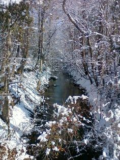 Winter at the creek