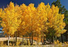 Autumn Color in the Jemez Mountains-Part I | Photo Flurries