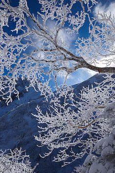 Admirer le soleil au travers du givre qui transforme les branches des arbres en les couvrant d'une couche diamantée.