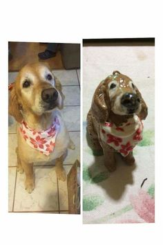 Handcrafted and customized clay pet replica #artcraftedpets #ivonneramoscreations
