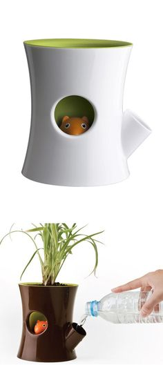 Squirrel Planter - the little squirrel will hide his head as a reminder for you to water your plant! Good for keeping in dorms.