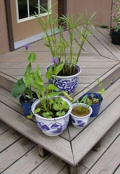 water garden plants in containers on patio
