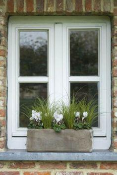 Notre top 7 des plantes d'hiver-Carex et cyclamen rustic cottage window decoration garden or outdoor white and green neutrals