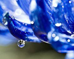magic drop photograph by Lori (Lori411) on etsy