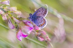 ----- BUTTERFLY ON THE FLOWER (the moment) ------