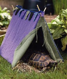 Knit a tent for your tortoise- from the book Pet Projects @Annie Morton Hah!
