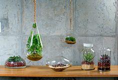 이끼·다육식물 등을 넣은 테라리엄. Terrarium.