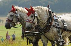 Draft Horses, Horse Art, Loom, Gypsy, Cute Animals, Future, Pretty Animals, Future Tense, Equine Art