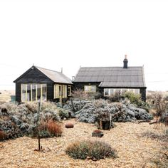 girlinthepark:Joe Pickard | Derek Jarman's Garden.