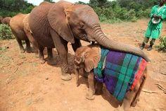 @David Nilsson Sheldrick Wildlife Trust