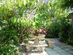 This tree has been carefully pruned to cover my patio table from the sun. It is a little messy. Cut the blooms off after they are finished. Lilac, Lavender, Tropical Landscaping, Patio Table, Palms, Green Leaves, Purple Flowers, Curb Appeal, Shrubs