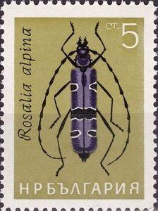Rosalia Longicorn (Rosalia alpina)