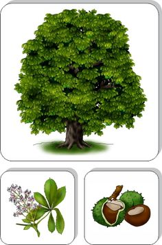 karty roční doby montessori - Hľadať Googlom Preschool Education, Elementary Science, Teaching Plants, Autumn Activities For Kids, Autumn Nature, Forest School, Montessori Materials, Nature Crafts, Earth Day