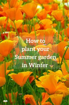 Plan for your Summer garden by sowing seeds and introducing hardy plants in late Winter. Here are my top picks on what to plant now for your Summer garden.