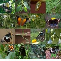 Butterfly Host Plant gardens