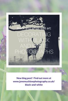 Black and White Gallery & Print Shop - Jane Mucklow Photography Photography Blogs, Buy Canvas, Black And White Wall Art, Landscape, Gallery, Nature, Flowers, Photos, Pictures