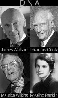 Rosalind Franklin was ESSENTIAL in the discovery commonly attributed only to Watson & Crick. Nice to see her included here! Amazing People, Good People, Maurice Wilkins, Central Dogma, Human Tongue, Human Genome, Historical Women, Natural Selection, Smart Women