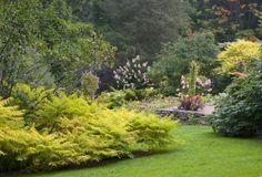 Golden Tiger Eye Cutleaf Sumac | | September Open Garden Tour: a giant botanical birdfeeder - A Way To Garden