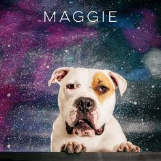 05/01/17-HOUSTON-She adores children and wants to be an inside dog so she can be close to her people. One of her favorite things to do is cuddle on the couch. Maggie gives amazing kisses, obeys basic commands, and is learning to get used to a leash.   Maggie is available for adoption through Jamie's Animal Rescue. Contact Jamie tagged on this post for more information or to fill out an adoption application.