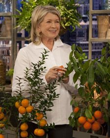 "Get tips on how much to water, how to fertilize, and at what temperature to keep citrus plants like orange trees and lemon trees on ""The Martha Stewart Show."""