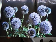 Watercolour Florals: Globe Thistles