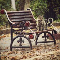 #algeria #photos #pictures #art #beautiful #picoftheday #photooftheday  #composition #focus #capture #moment #cat #cats #TagsForLikes #catsagram #catstagram #instagood #kitty #kittens #animals #petstagram