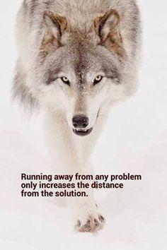 Rhonda Lanier  Shared Wolves of the Rockies Photo