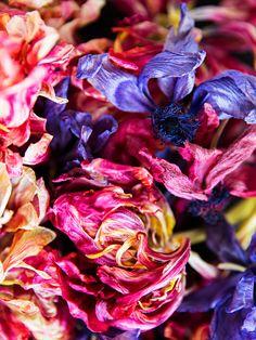 Les Fleurs Mortes 1 | Photography by Brittany Ambridge